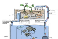 Aquaponic Farming Business Plan In India Learn To Commercial throughout Aquaponics Business Plan Templates