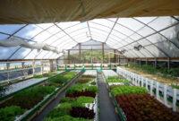 Aquaponic Farming Business Plan Plans Commercial Aquaponics within Aquaponics Business Plan Templates