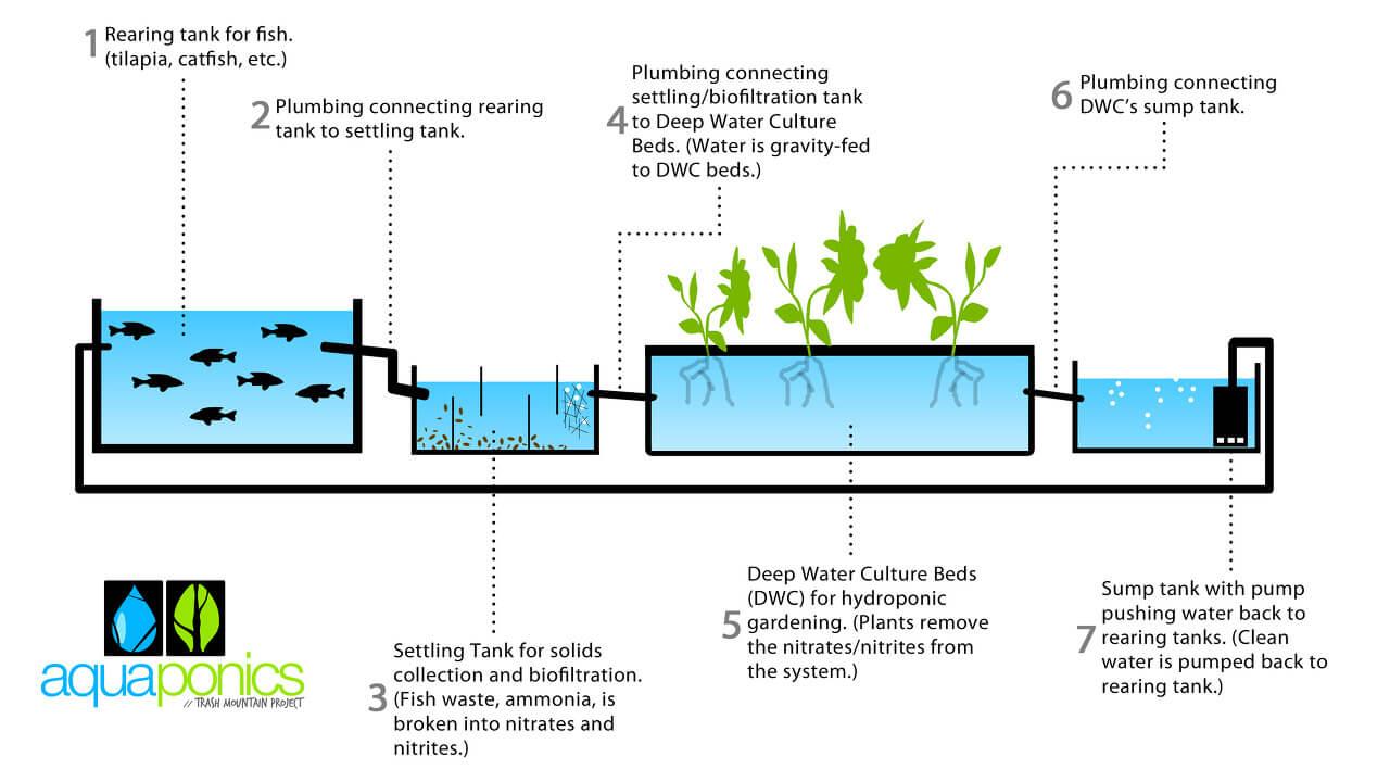 Aquaponics System Plans: Commercial Aquaponics Business Plan Pdf Inside Aquaponics Business Plan Templates