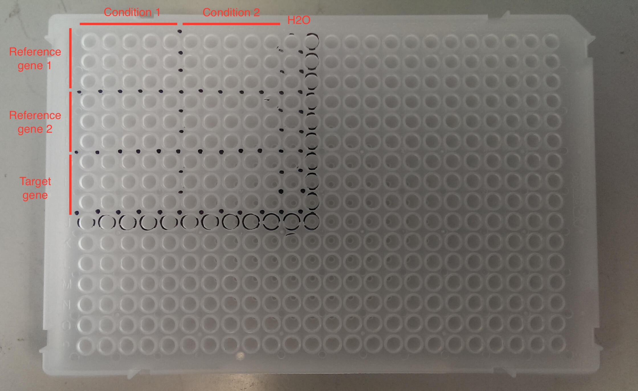 Barrick Lab :: Qpcr With 384 Well Plate Template