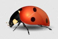 Blank Ladybug Template | Vector Close-Up Realistic Ladybug with regard to Blank Ladybug Template