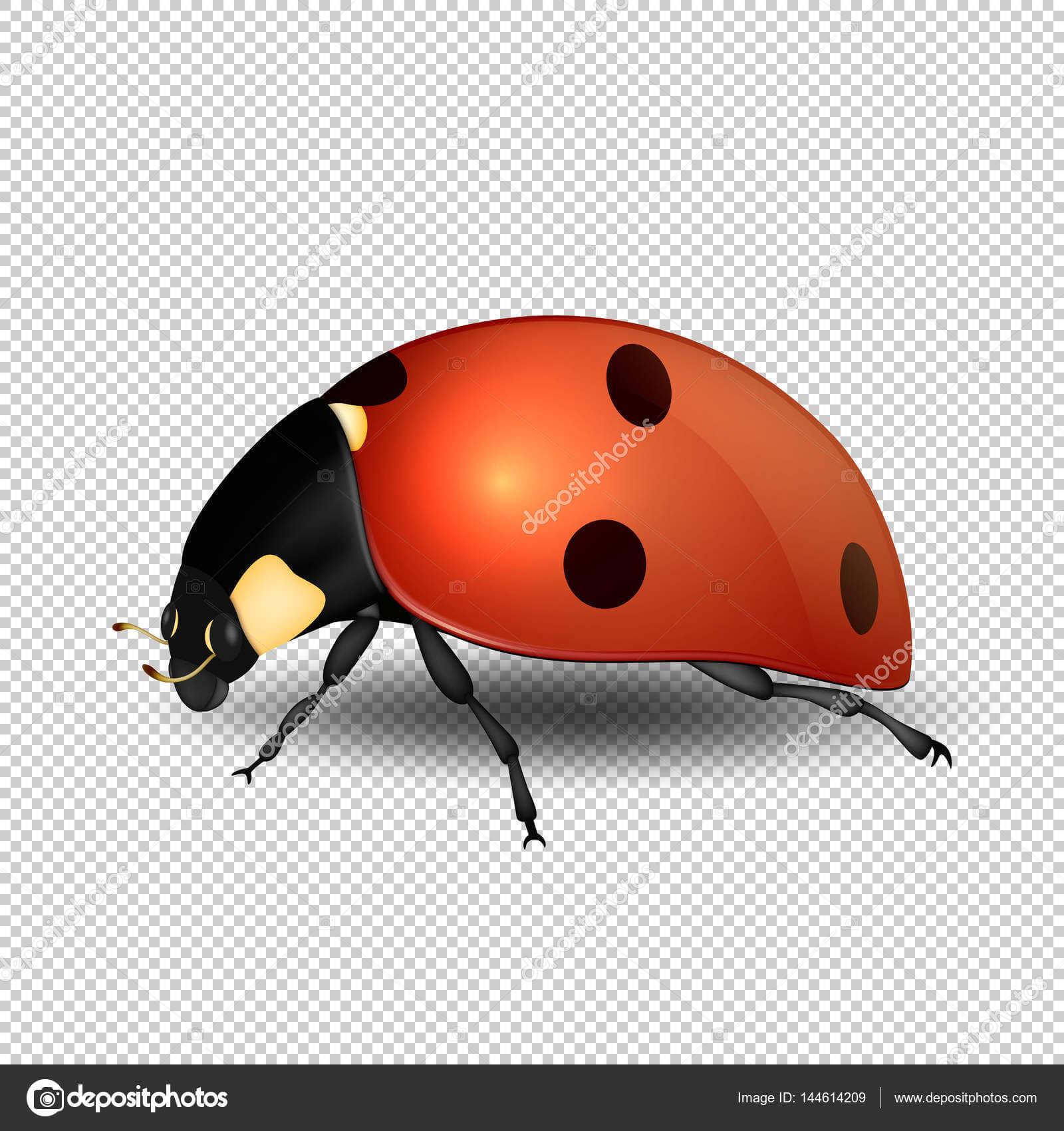Blank Ladybug Template   Vector Close Up Realistic Ladybug With Regard To Blank Ladybug Template