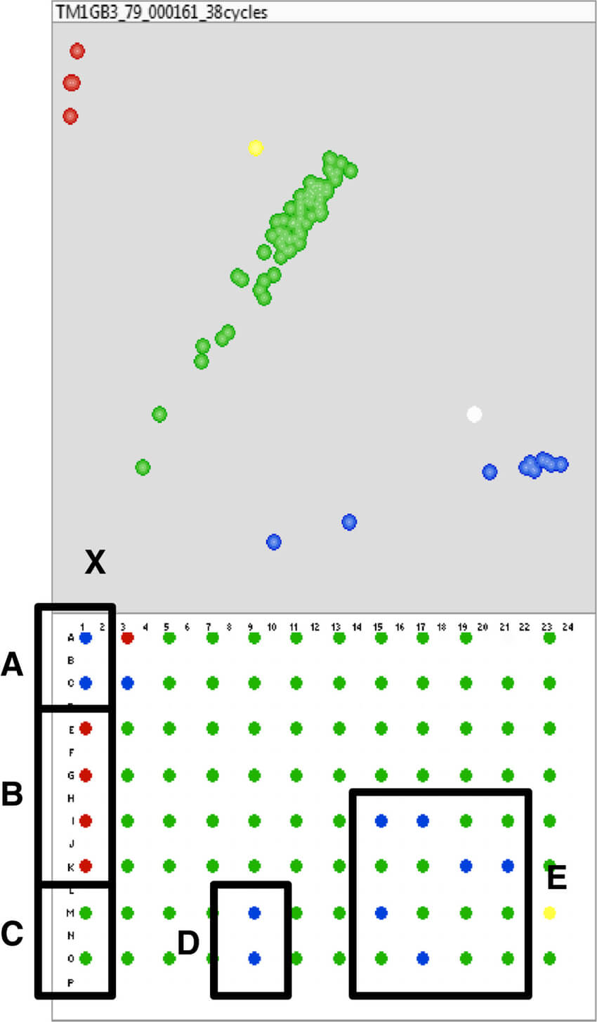 Kasp Genotyping Of Marker Uccg10563 649. A1 Quadrant Of A Regarding 384 Well Plate Template